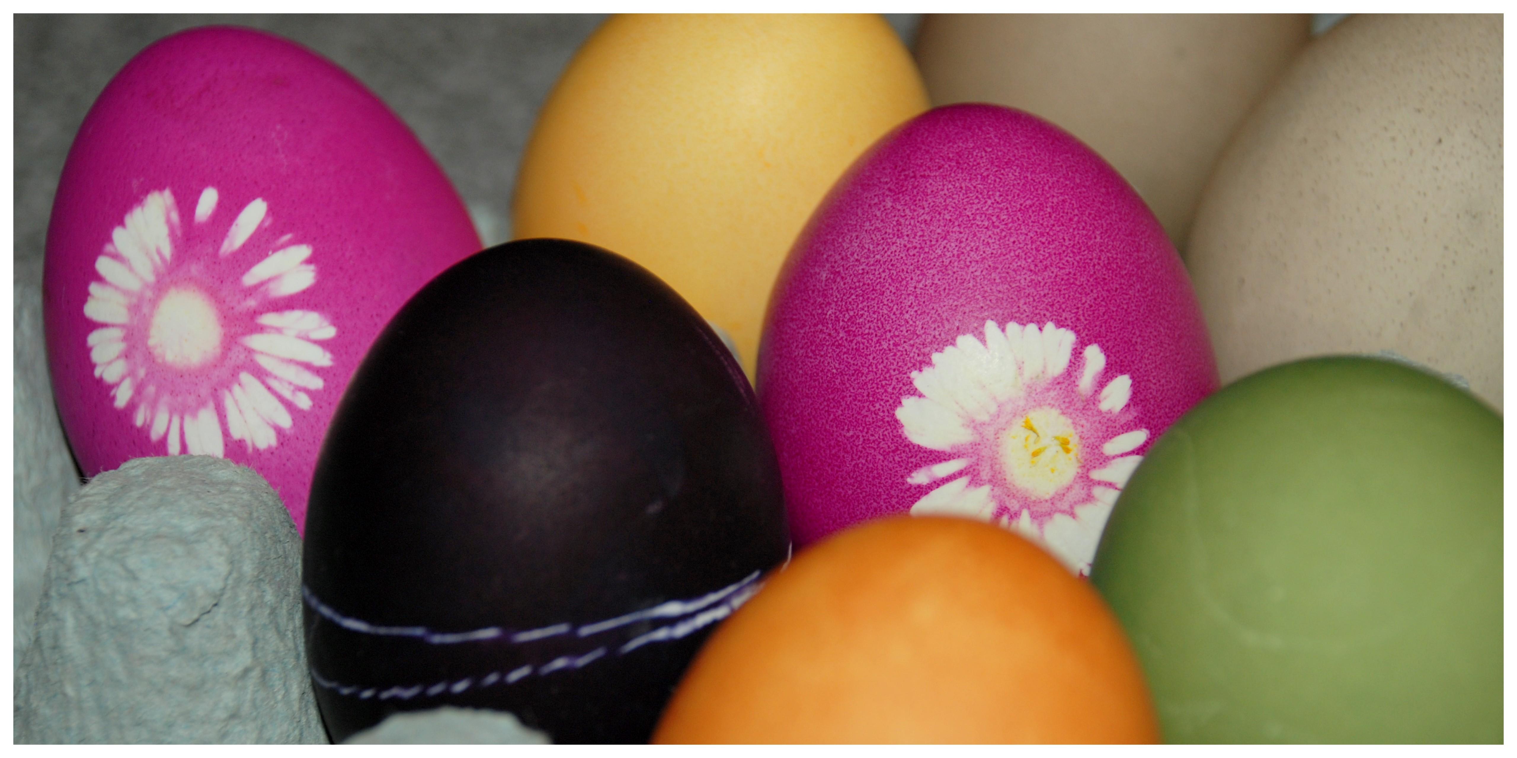 Es ostert sehr! Ostereierfärben mit Naturfarben – Naschkatze