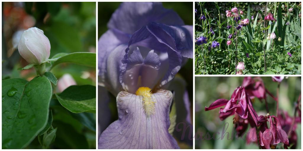 Garten im Mai 2