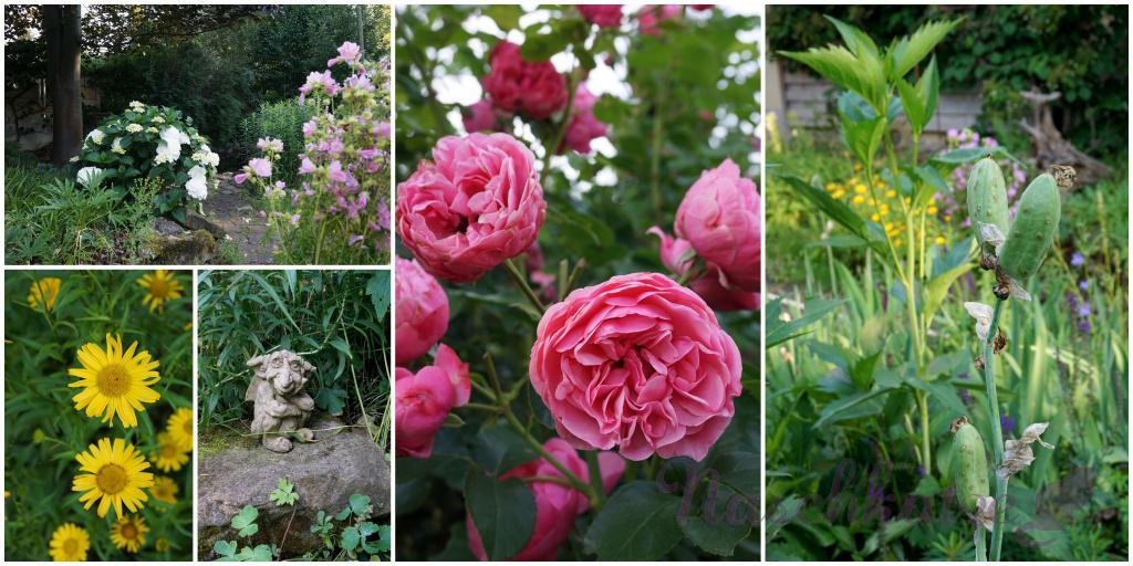 Garten und Felder Juni 2015